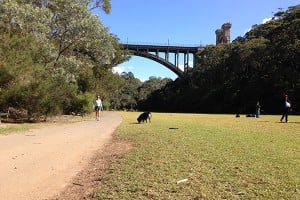 Tunks Park, Cammeray
