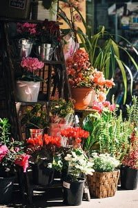 Flower shop in Wahroonga