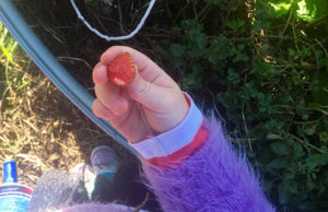 Picking-fresh-strawberries,-they-were-so-delicious!