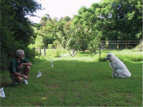 Trainer-dog-flag-image-HF