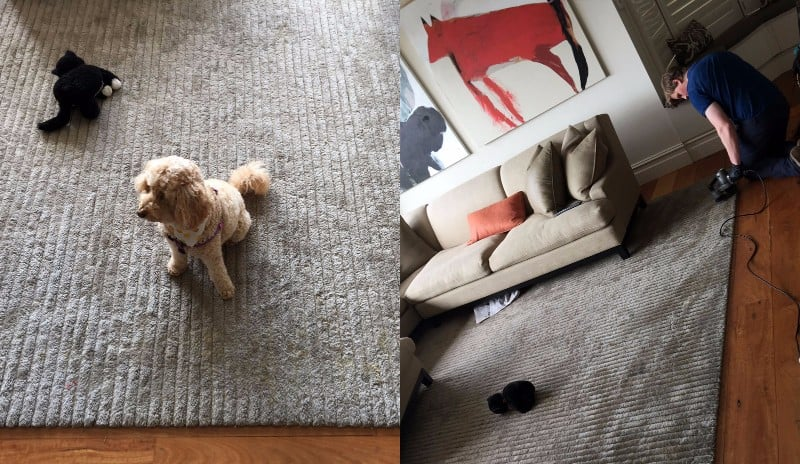 Wool-rug-with-dog-urine-stains-in-Mosman