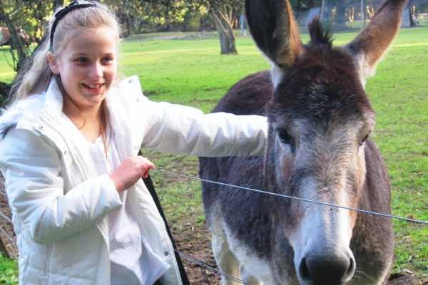 7.-nsm-donkey_morven