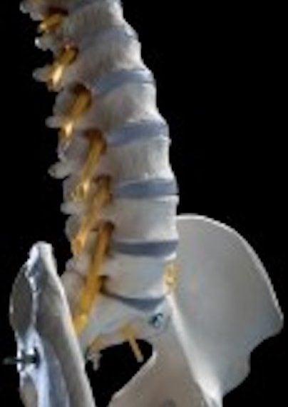 spine-3-1