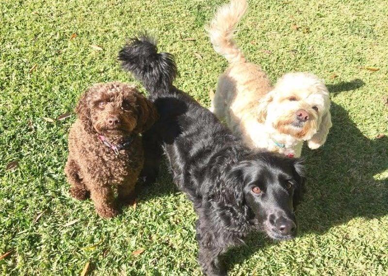 3-dogs-lighter