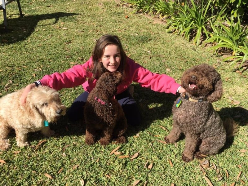 Maddie-3-dogs