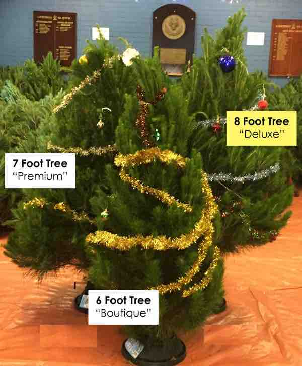 northbridge-sea-scouts-christmas-tree