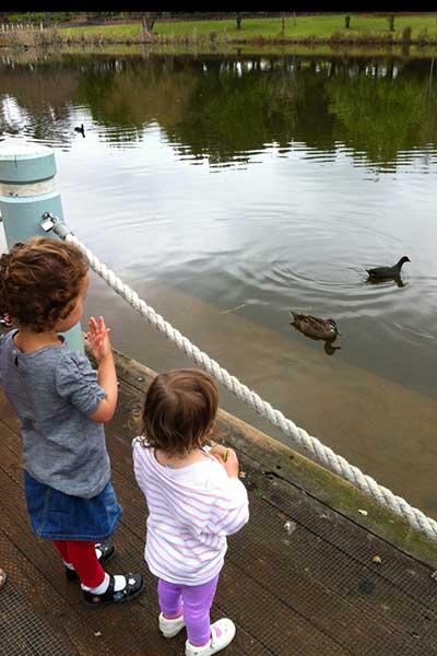 Ducks at Fagan Park