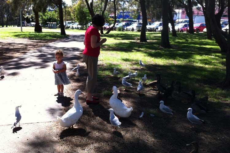 Narrabeen Lagoon ducks