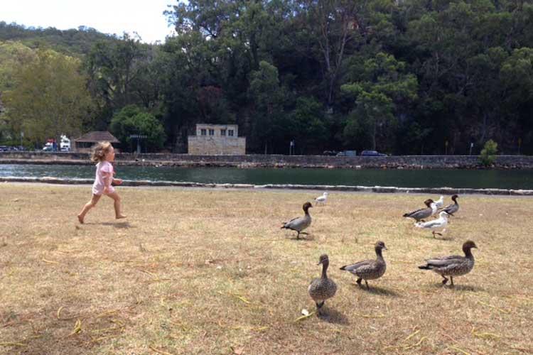 Bobbin Head ducks