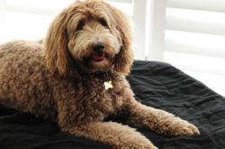 A guide to choosing a new dog for your family