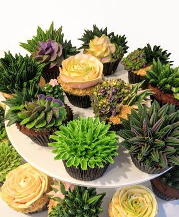 Succulent_3