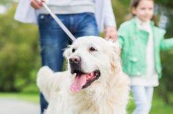 11 Best Kid-Friendly Dogs