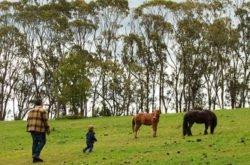 NSM Review: Duckmaloi Farm