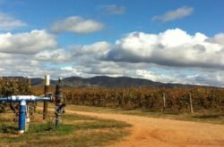 Mum's food and wine weekend away: Mudgee, NSW