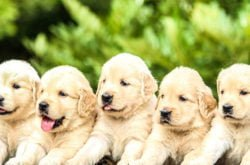 New rules for selling cats and dogs- don't get fined!