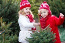 Keep it fresh! Make your Christmas tree last