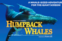 NSM Review: Humpback Whales 3D at IMAX Theatre Darling Harbour