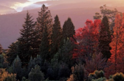 Day trip: Blue Mountains Botanic Gardens, Mount Tomah