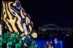 Be a Light for the Wild at Taronga Zoo's Vivid Sydney