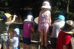 NSM Review: Toddlers & Tadpoles at St Ives Wildflower Gardens