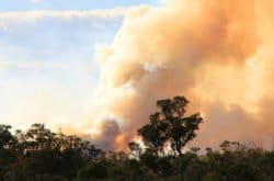 Be prepared for bushfire season in Sydney