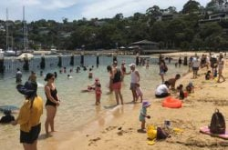 sydney harbour beach