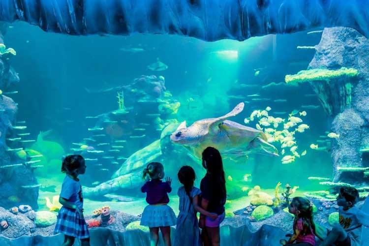 SEA LIFE Sydney Aquarium at Darling Harbour