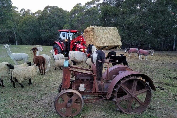 Morvern-Valley-Farmstay-10