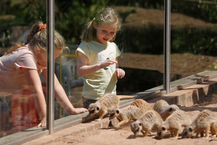wildlife park taronga zoo meerkats