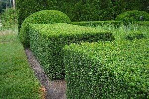 hedge1587973091