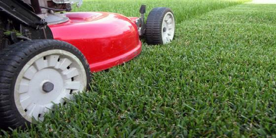 lawns1587972540