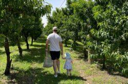Apple picking at Bilpin Fruit Bowl