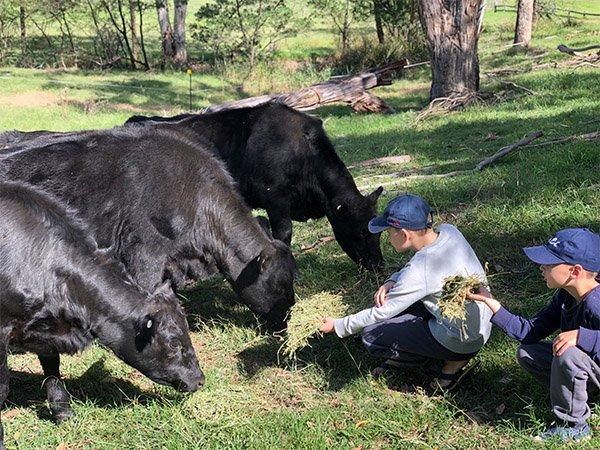 farmstayfeedingcows1589939858