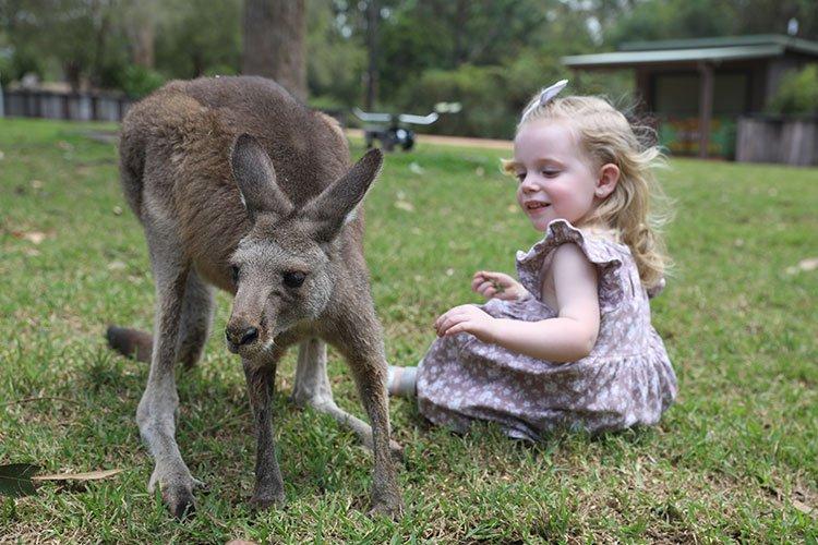 Australian Reptile Park wildlife park kangaroo