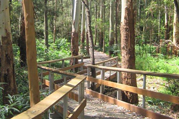 Little Bluegum Creek Track, Lindfield
