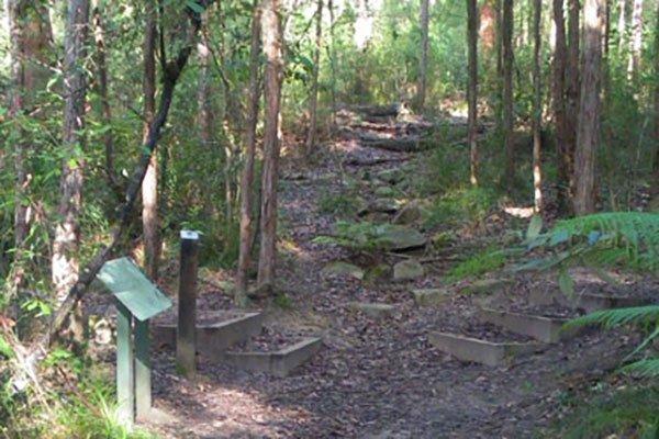 Sheldon Forest child-friendly bushwalks north shore