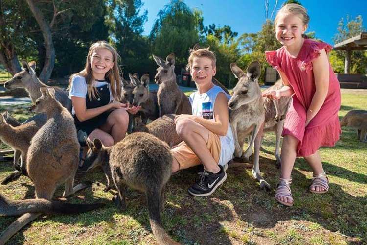 Symbio Wildlife park kangaroos