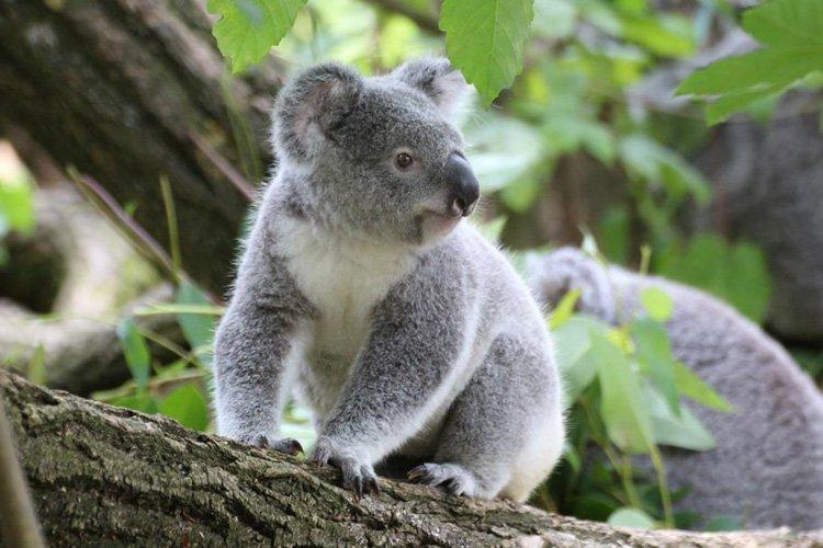 WILD LIFE Sydney Zoo wildlife park