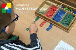 north shore preschool forestville