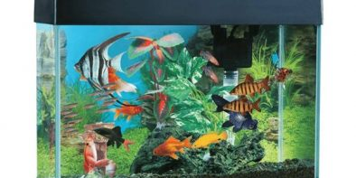 Fish-Tank-home-hq