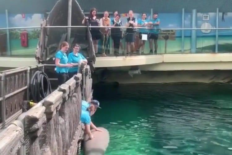 Dugong Sydney Aquarium