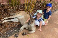 Australian Reptile Park kangaroos