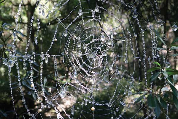 ku-ring-gai-web