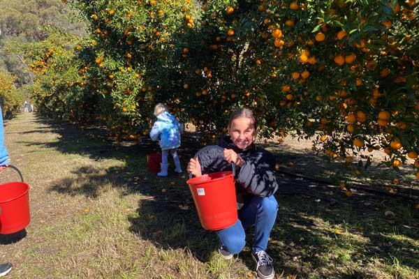 Mandarin tree farm