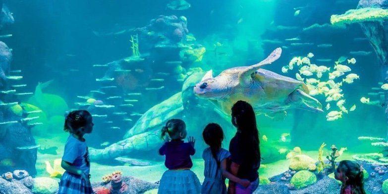 Sydney Sea Life