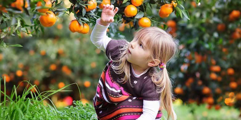 Mandarin Picking