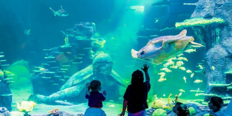 SeaLifeAquarium-Sydney